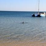 Unterwegs mit Alex und Wolfgang in Western Australia – Kalbarri NP – Delfine in Monkey Mia